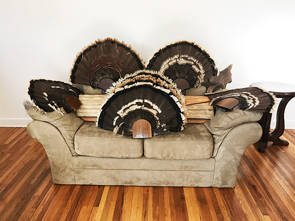 turkey-feathers-mounted-on-couch-in-richfield-minnesota